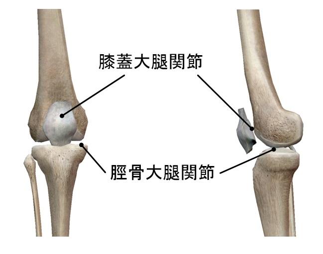 X脚』『O脚』でお悩みの方へ。膝のお話②